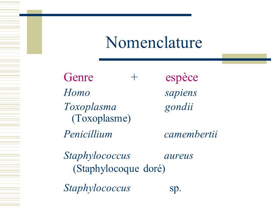 Nomenclature Genre + espèce Homo sapiens Toxoplasma gondii (Toxoplasme) Penicillium camembertii Staphylococcus aureus (Staphylocoque doré) Staphylococ