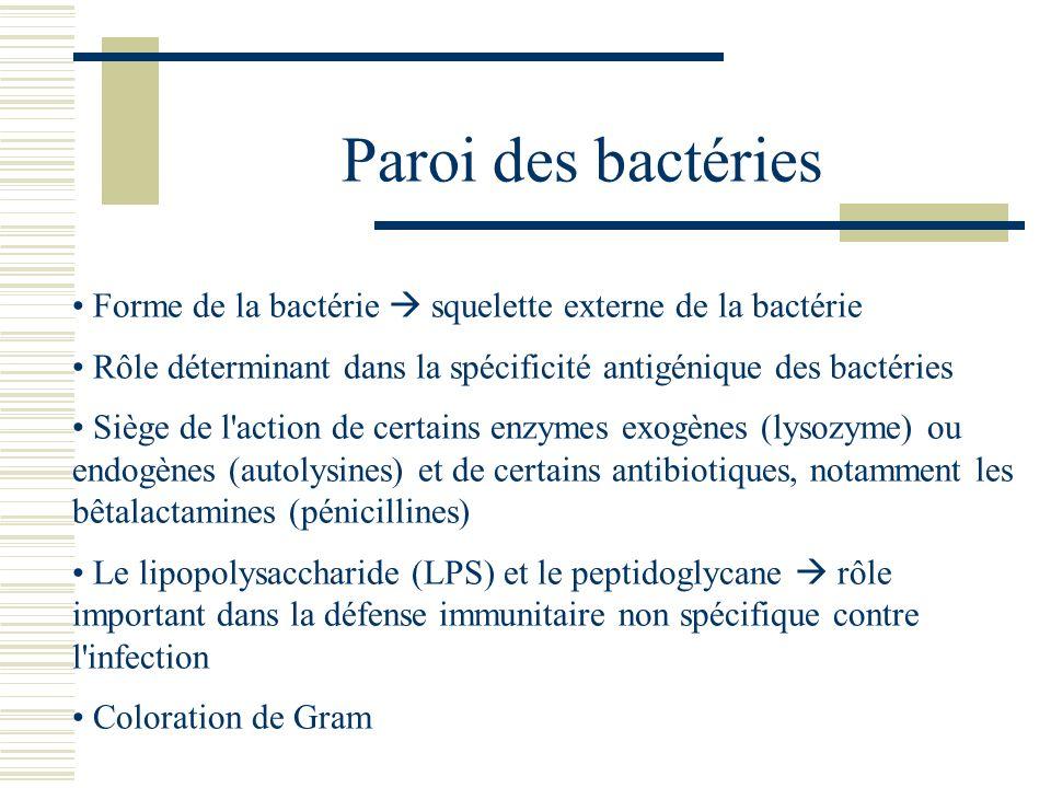 Paroi des bactéries Forme de la bactérie squelette externe de la bactérie Rôle déterminant dans la spécificité antigénique des bactéries Siège de l'ac