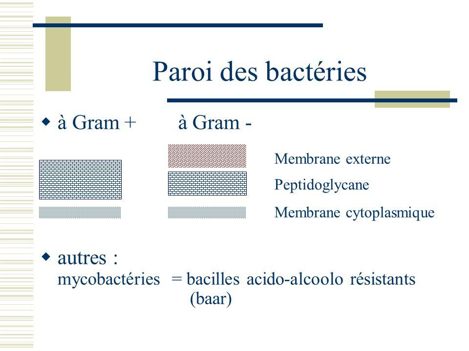 Paroi des bactéries à Gram + à Gram - Membrane externe Peptidoglycane Membrane cytoplasmique autres : mycobactéries = bacilles acido-alcoolo résistant