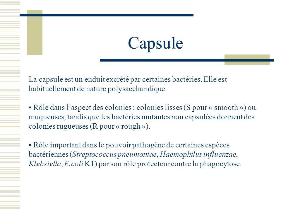 Capsule La capsule est un enduit excrété par certaines bactéries. Elle est habituellement de nature polysaccharidique Rôle dans laspect des colonies :