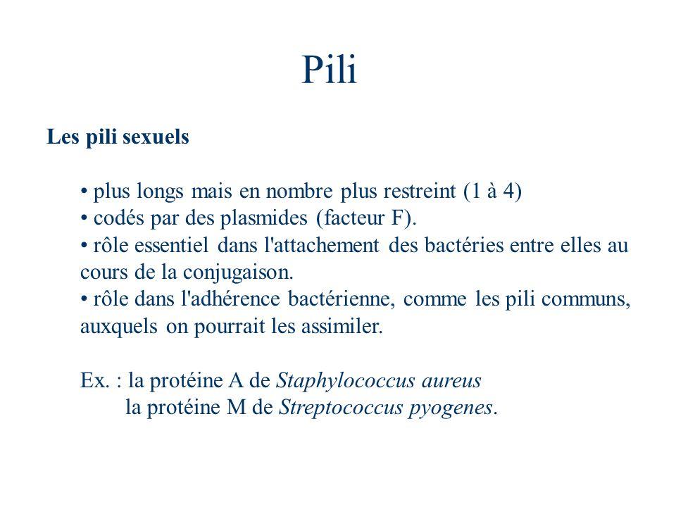 Pili Les pili sexuels plus longs mais en nombre plus restreint (1 à 4) codés par des plasmides (facteur F). rôle essentiel dans l'attachement des bact