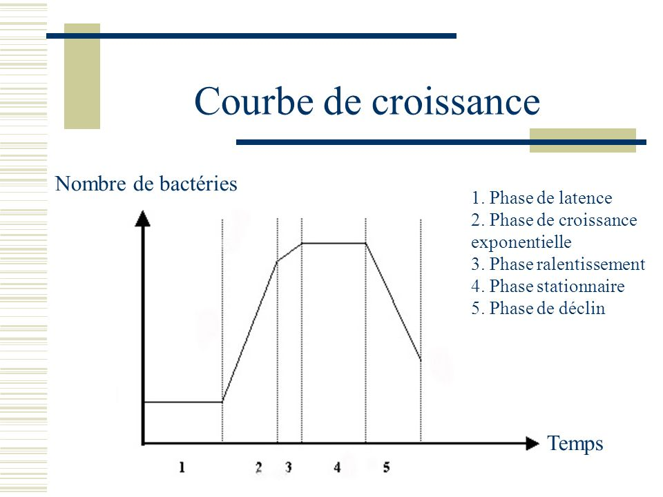 Courbe de croissance Nombre de bactéries Temps 1. Phase de latence 2. Phase de croissance exponentielle 3. Phase ralentissement 4. Phase stationnaire