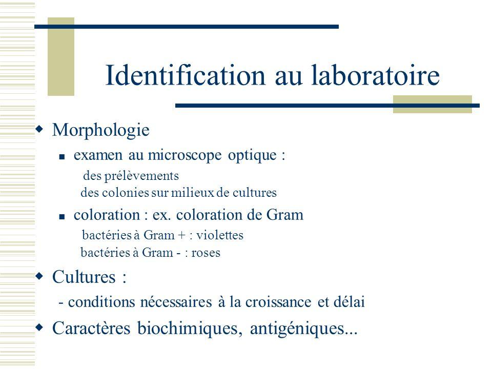 Identification au laboratoire Morphologie examen au microscope optique : des prélèvements des colonies sur milieux de cultures coloration : ex. colora