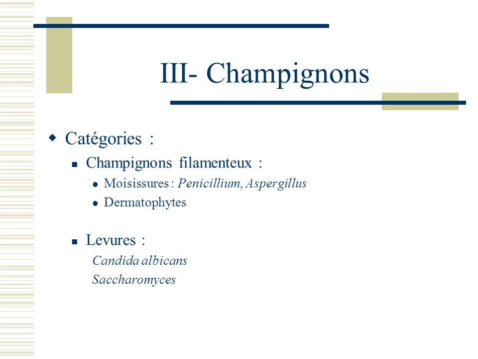 III- Champignons Catégories : Champignons filamenteux : Moisissures : Penicillium, Aspergillus Dermatophytes Levures : Candida albicans Saccharomyces