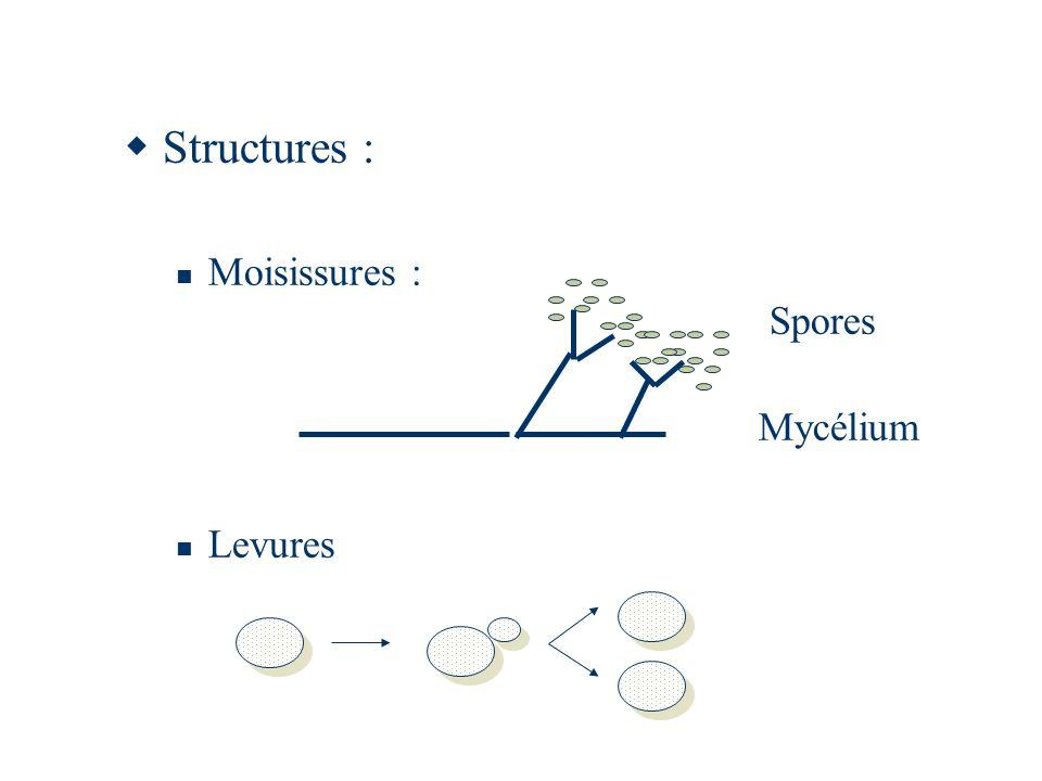 Structures : Moisissures : Spores Mycélium Levures
