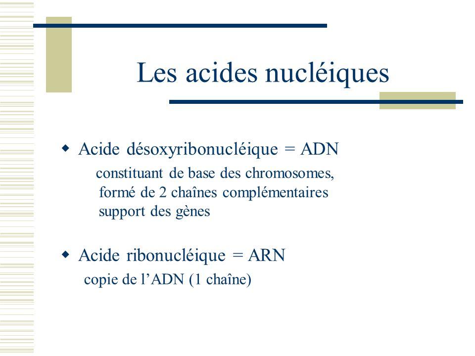 Les acides nucléiques Acide désoxyribonucléique = ADN constituant de base des chromosomes, formé de 2 chaînes complémentaires support des gènes Acide