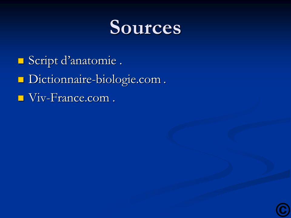 Sources Script danatomie. Script danatomie. Dictionnaire-biologie.com. Dictionnaire-biologie.com. Viv-France.com. Viv-France.com.