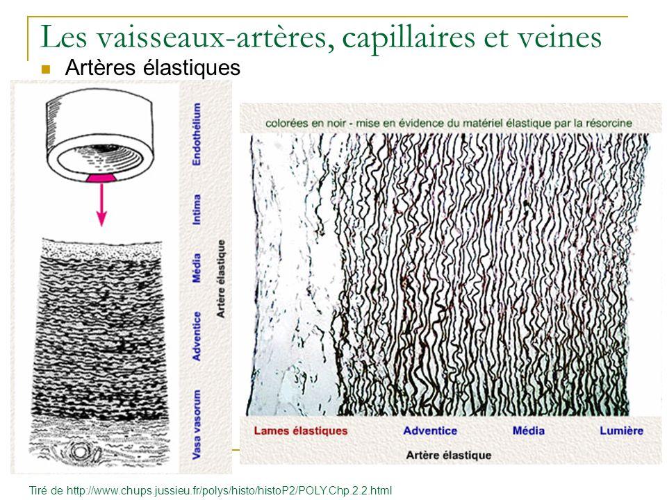 Les vaisseaux-artères, capillaires et veines Artères élastiques Tiré de http://www.chups.jussieu.fr/polys/histo/histoP2/POLY.Chp.2.2.html