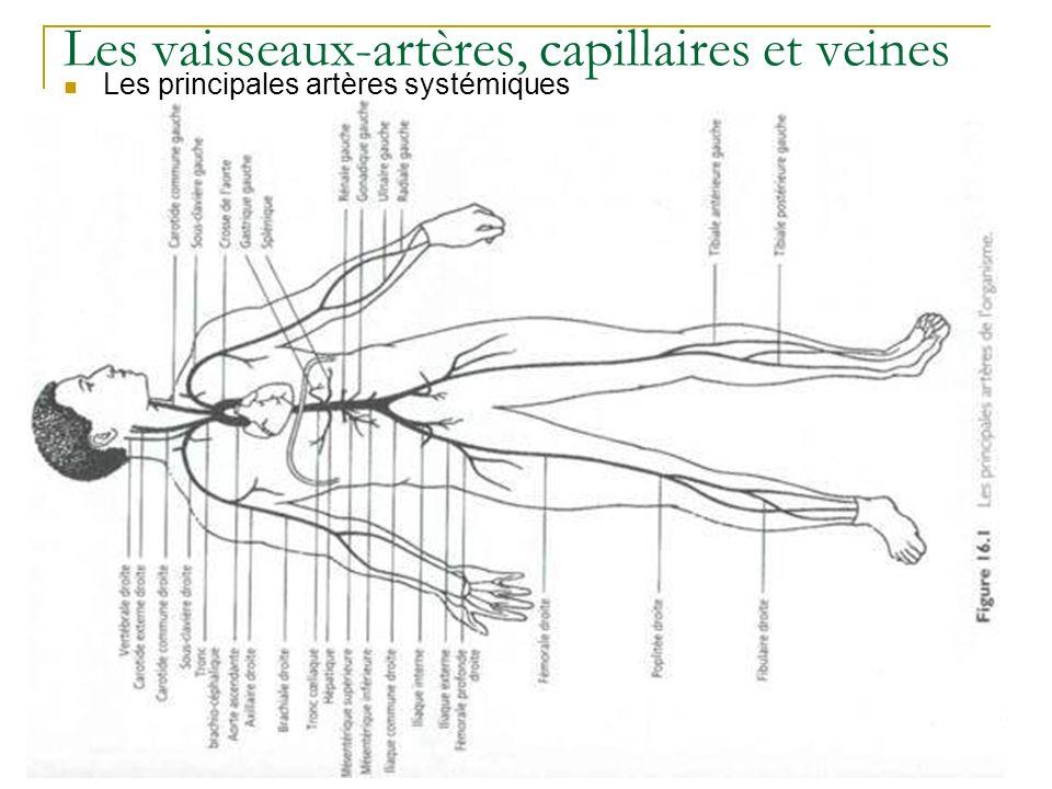 Les vaisseaux-artères, capillaires et veines Les principales artères systémiques