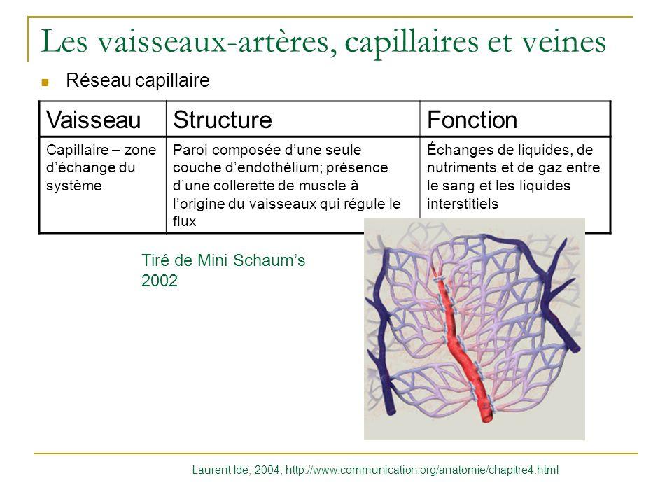 Les vaisseaux-artères, capillaires et veines Réseau capillaire VaisseauStructureFonction Capillaire – zone déchange du système Paroi composée dune seu