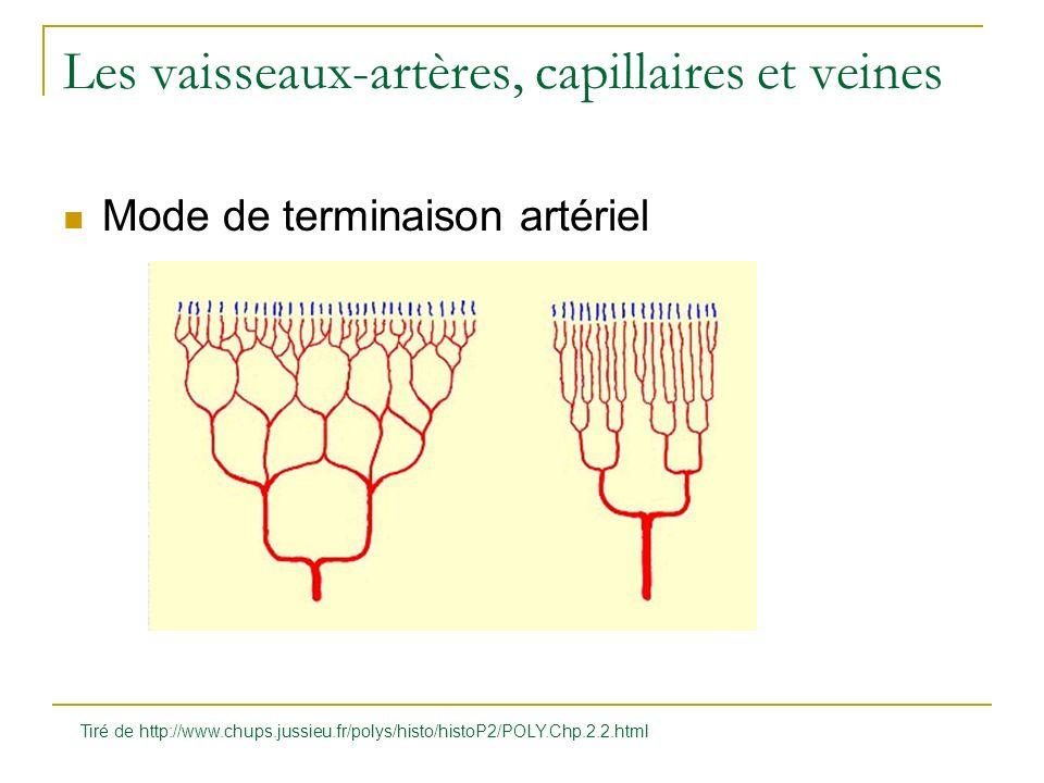 Les vaisseaux-artères, capillaires et veines Mode de terminaison artériel Tiré de http://www.chups.jussieu.fr/polys/histo/histoP2/POLY.Chp.2.2.html