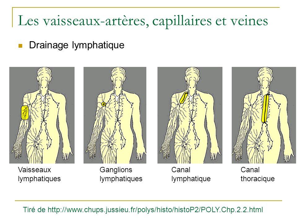 Les vaisseaux-artères, capillaires et veines Drainage lymphatique Vaisseaux lymphatiques Ganglions lymphatiques Canal lymphatique Canal thoracique Tir