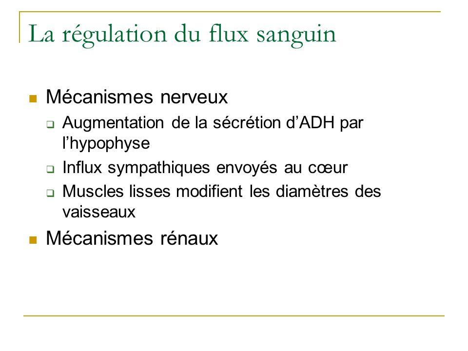 La régulation du flux sanguin Mécanismes nerveux Augmentation de la sécrétion dADH par lhypophyse Influx sympathiques envoyés au cœur Muscles lisses m