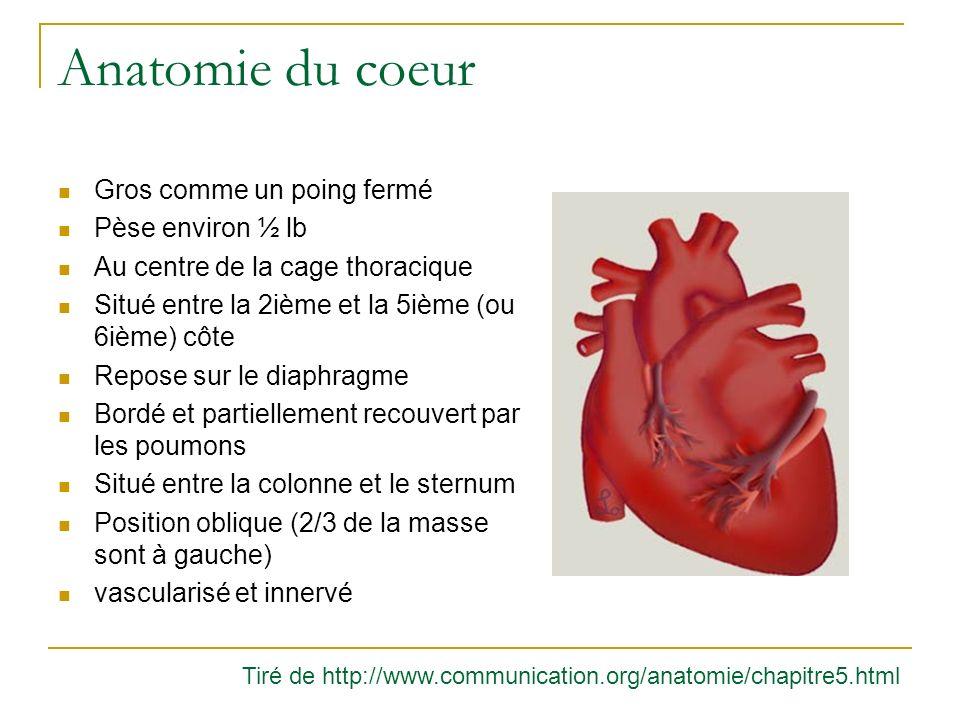 Anatomie du coeur Tiré de http://www.communication.org/anatomie/chapitre5.html Gros comme un poing fermé Pèse environ ½ lb Au centre de la cage thorac