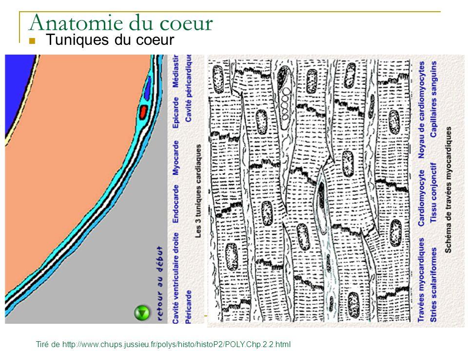 Anatomie du coeur Tuniques du coeur Tiré de http://www.chups.jussieu.fr/polys/histo/histoP2/POLY.Chp.2.2.html