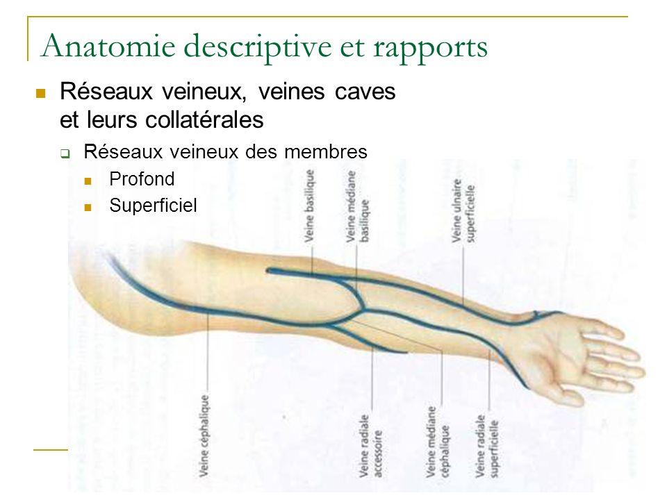 Anatomie descriptive et rapports Réseaux veineux, veines caves et leurs collatérales Réseaux veineux des membres Profond Superficiel