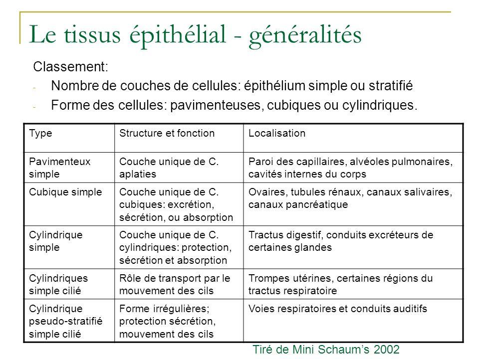 Le tissus épithélial - généralités Classement: - Nombre de couches de cellules: épithélium simple ou stratifié - Forme des cellules: pavimenteuses, cu