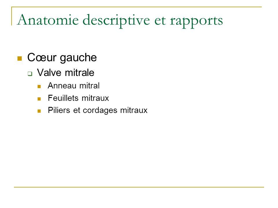 Anatomie descriptive et rapports Cœur gauche Valve mitrale Anneau mitral Feuillets mitraux Piliers et cordages mitraux