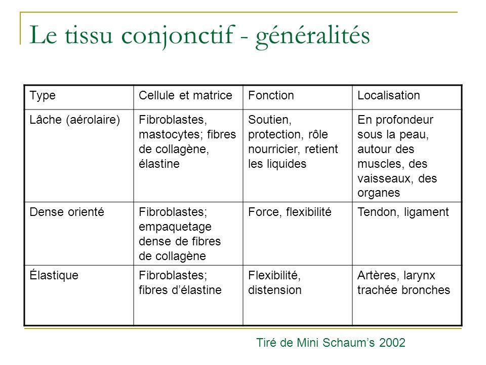 Anatomie descriptive et rapports Cœur gauche Valve mitrale: insuffisance http://www.besancon-cardio.net/student/cours/17-im.htm