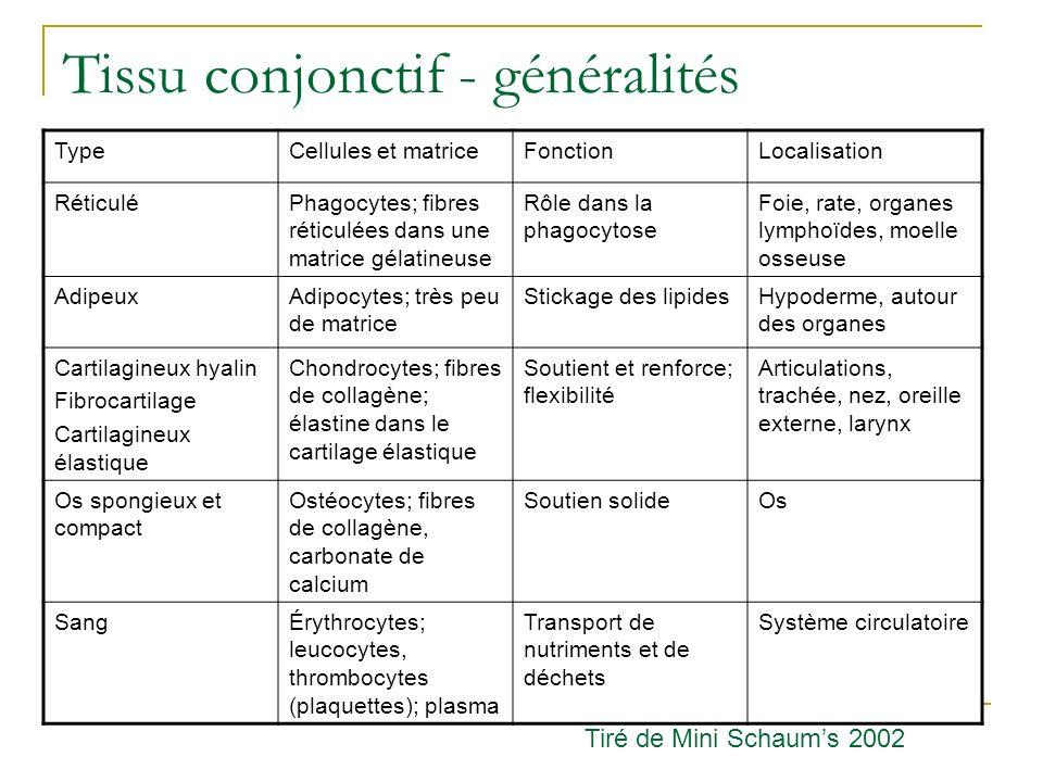 Anatomie descriptive et rapports Cœur gauche Ventricule gauche STAPS, 2002