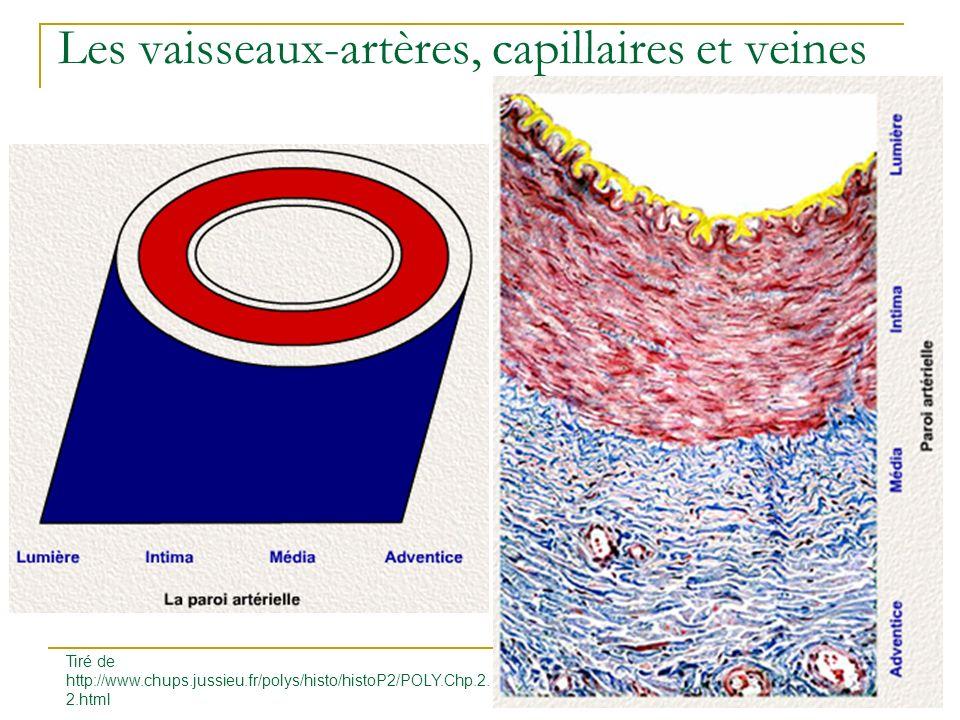 Les vaisseaux-artères, capillaires et veines Histophysiologie endothéliale artérielle Tiré de http://www.chups.jussieu.fr/polys/histo/histoP2/POLY.Chp.2.2.html