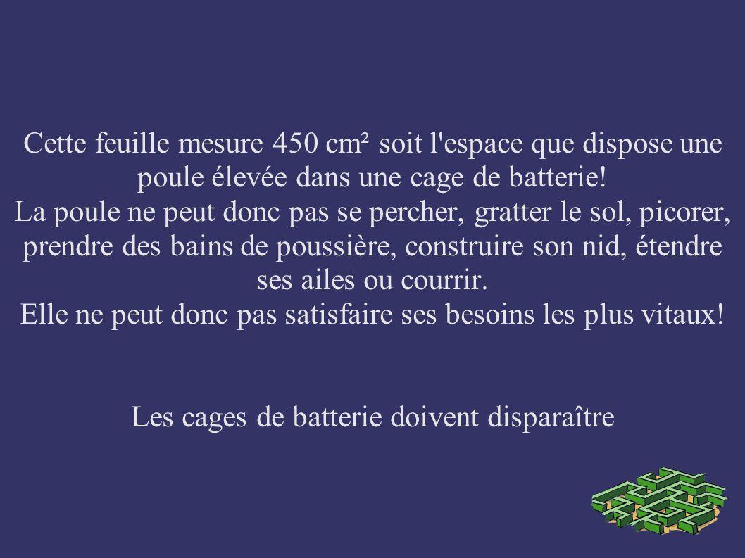 Cette feuille mesure 450 cm² soit l espace que dispose une poule élevée dans une cage de batterie.