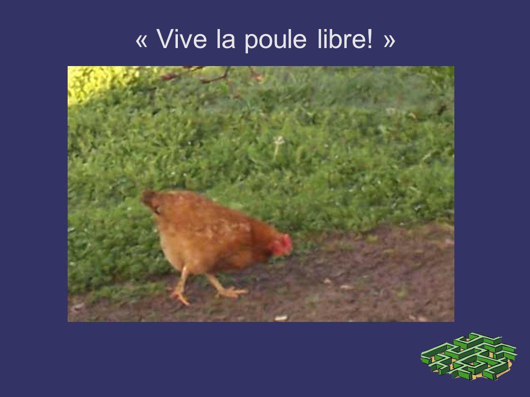 « Vive la poule libre! »