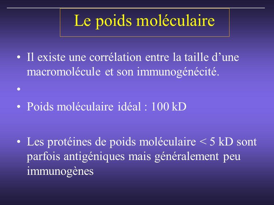 Le poids moléculaire Il existe une corrélation entre la taille dune macromolécule et son immunogénécité.