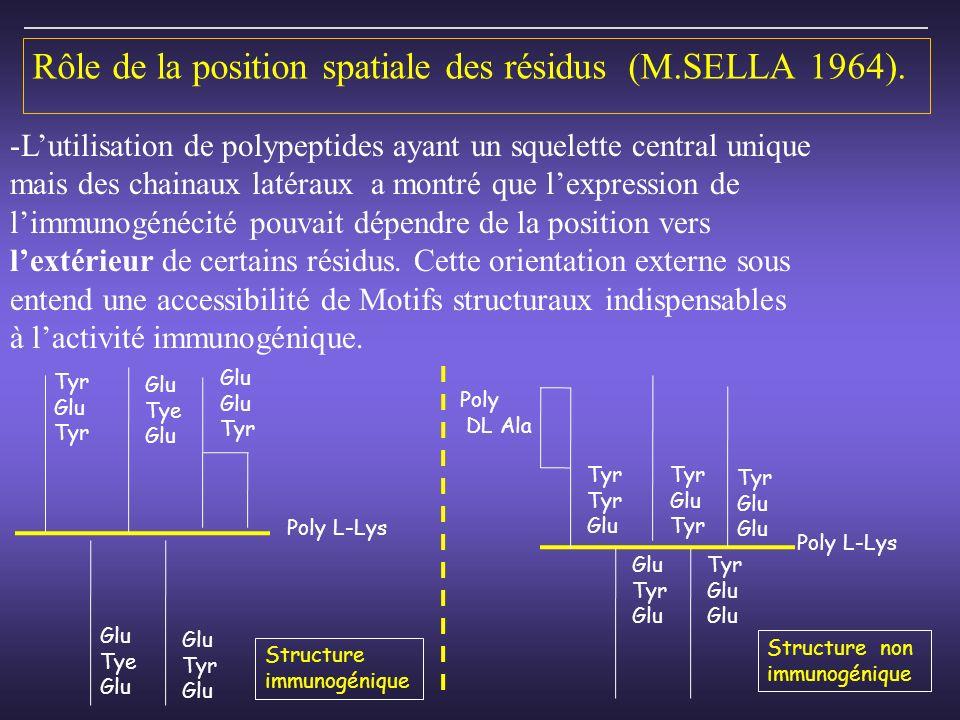 Rôle de la position spatiale des résidus (M.SELLA 1964).