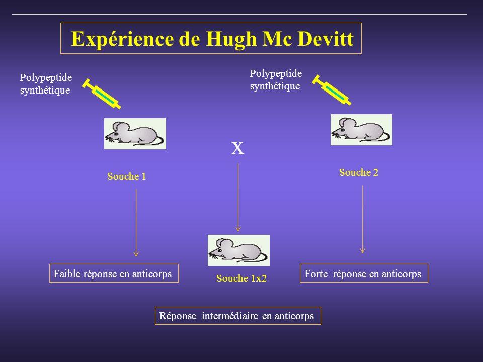 Expérience de Hugh Mc Devitt Souche 1 Souche 2 Polypeptide synthétique Polypeptide synthétique Faible réponse en anticorpsForte réponse en anticorps Réponse intermédiaire en anticorps x Souche 1x2
