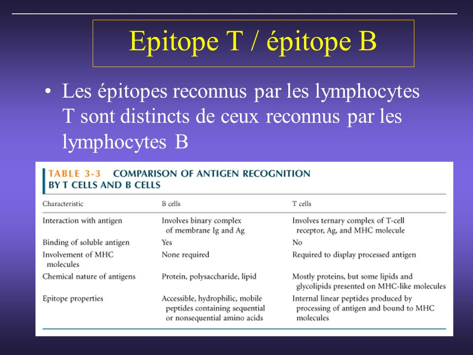 Epitope T / épitope B Les épitopes reconnus par les lymphocytes T sont distincts de ceux reconnus par les lymphocytes B