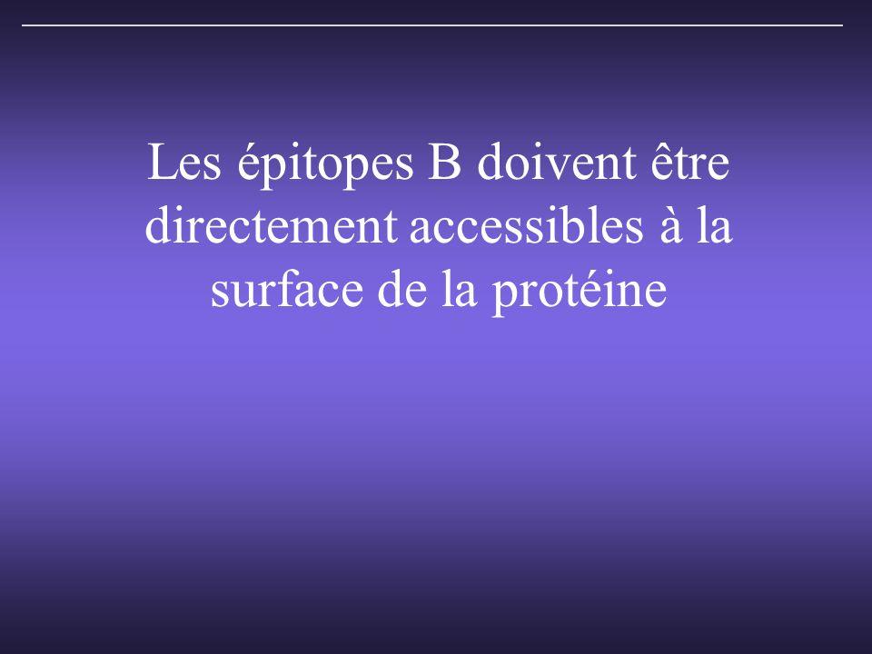 Les épitopes B doivent être directement accessibles à la surface de la protéine