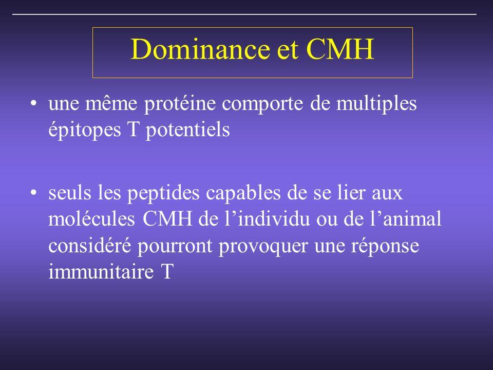 Dominance et CMH une même protéine comporte de multiples épitopes T potentiels seuls les peptides capables de se lier aux molécules CMH de lindividu ou de lanimal considéré pourront provoquer une réponse immunitaire T