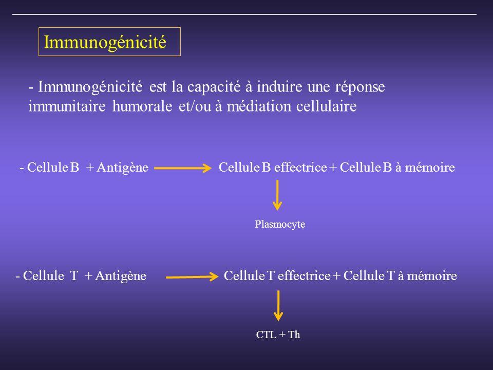 - Immunogénicité est la capacité à induire une réponse immunitaire humorale et/ou à médiation cellulaire - Cellule B + Antigène Cellule B effectrice + Cellule B à mémoire Plasmocyte - Cellule T + Antigène Cellule T effectrice + Cellule T à mémoire CTL + Th