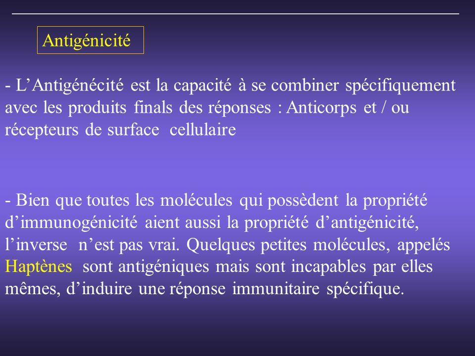 Antigénicité - LAntigénécité est la capacité à se combiner spécifiquement avec les produits finals des réponses : Anticorps et / ou récepteurs de surface cellulaire - Bien que toutes les molécules qui possèdent la propriété dimmunogénicité aient aussi la propriété dantigénicité, linverse nest pas vrai.