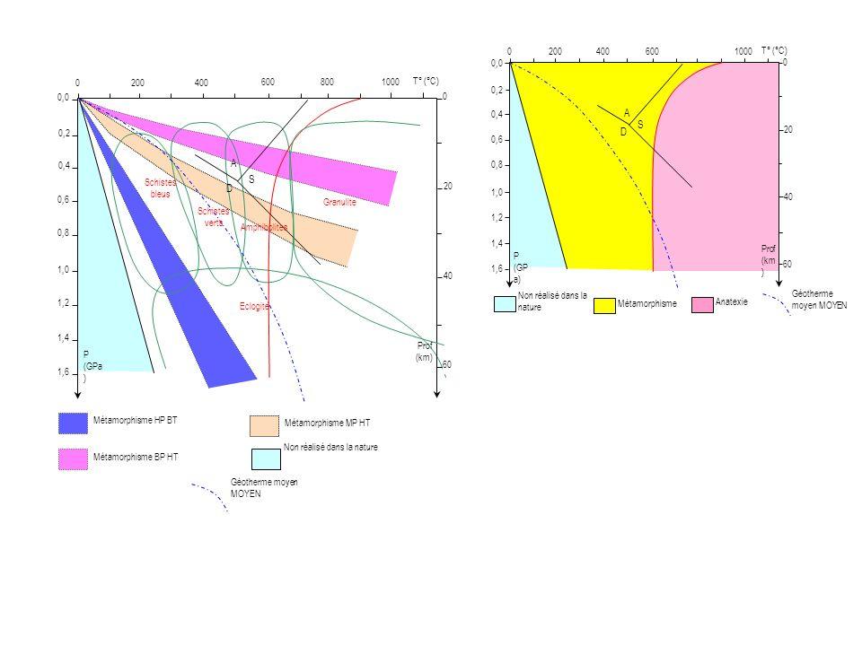 Non réalisé dans la nature Métamorphisme 2000400 600 1000 0,2 0,4 0,0 0,6 0,8 1,0 1,2 1,4 1,6 20 40 60 0 Prof (km ) P (GP a) T° (°C) S A D Anatexie Géotherme moyen MOYEN Métamorphisme HP BT Métamorphisme MP HT Métamorphisme BP HT Non réalisé dans la nature 2000400 600800 1000 0,2 0,4 0,0 0,6 0,8 1,0 1,2 1,4 1,6 20 40 60 0 Prof (km) P (GPa ) T° (°C) S A D Schistes bleus Schistes verts Amphibolites Granulite Eclogite Géotherme moyen MOYEN