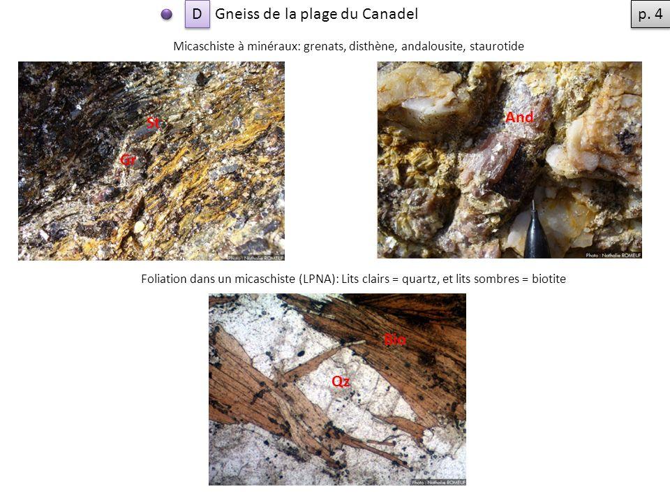 Gneiss de la plage du Canadel Micaschiste à minéraux: grenats, disthène, andalousite, staurotide Gr And St Foliation dans un micaschiste (LPNA): Lits clairs = quartz, et lits sombres = biotite Qz Bio D D p.