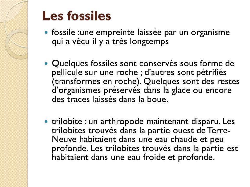 Les fossiles fossile :une empreinte laissée par un organisme qui a vécu il y a très longtemps Quelques fossiles sont conservés sous forme de pellicule