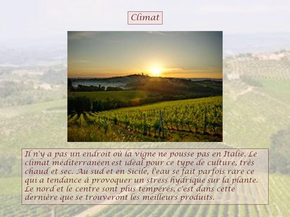 Climat Il n'y a pas un endroit où la vigne ne pousse pas en Italie. Le climat méditerranéen est idéal pour ce type de culture, très chaud et sec. Au s