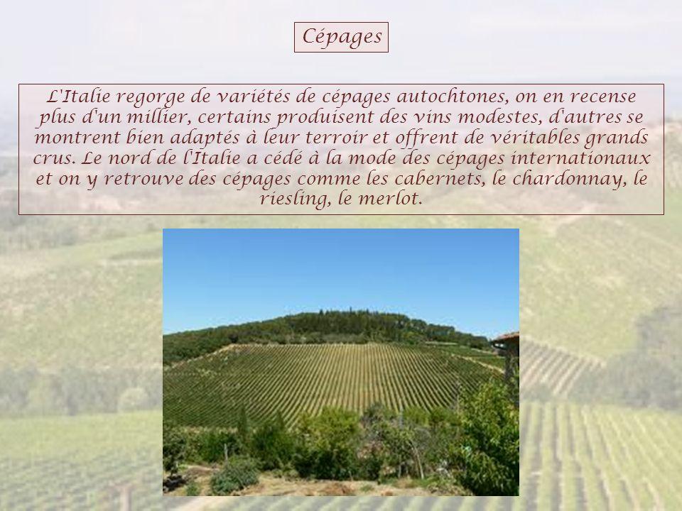 Cépages L'Italie regorge de variétés de cépages autochtones, on en recense plus d'un millier, certains produisent des vins modestes, d'autres se montr