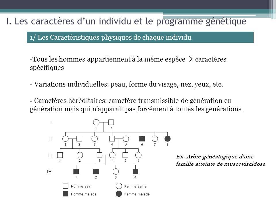 2/ La localisation du programme génétique (intro) Image de cellules en division dans une racine dail (coloration: Feulgen) + détail -Programme génétique: ensemble des informations génétiques qui déterminent les caractères individuels dun individu - Chromosome: à représenter (légendes min: chromatide, centromère; titre: schéma dun chromosome)