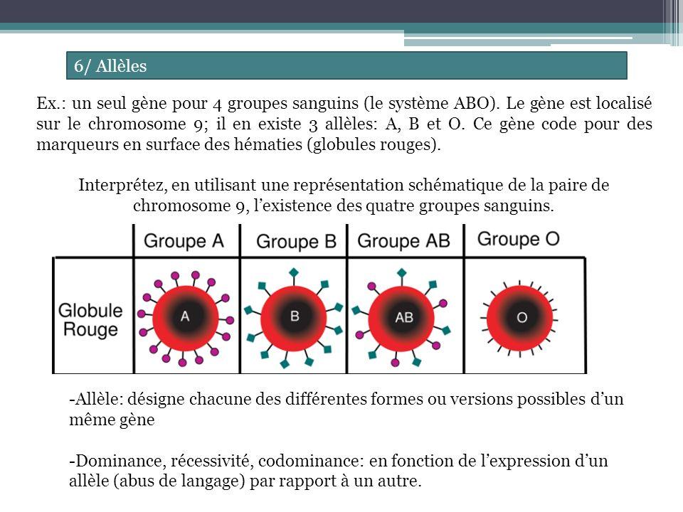 6/ Allèles Ex.: un seul gène pour 4 groupes sanguins (le système ABO).