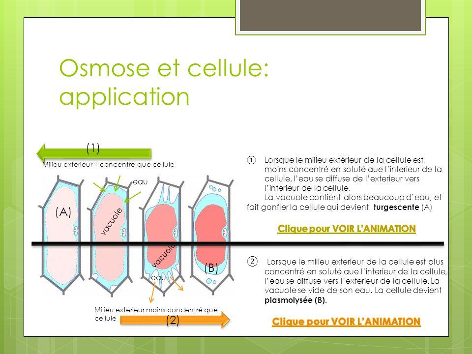 Osmose et cellule: application (2) (A) (B) (1) Milieu exterieur moins concentré que cellule Milieu exterieur + concentré que cellule vacuole eau