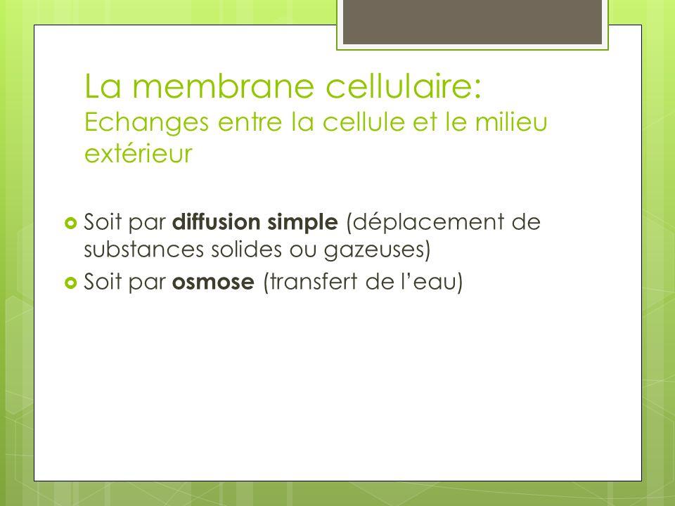 La membrane cellulaire: Echanges entre la cellule et le milieu extérieur Soit par diffusion simple (déplacement de substances solides ou gazeuses) Soi