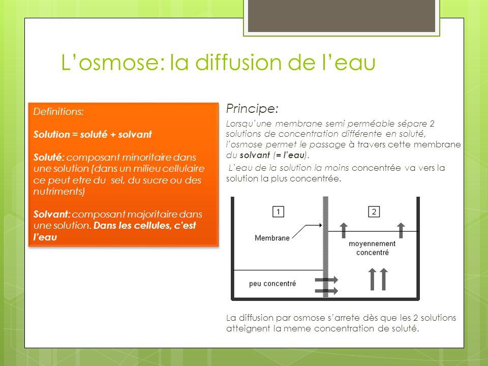 Losmose: la diffusion de leau Principe: Lorsquune membrane semi perméable sépare 2 solutions de concentration différente en soluté, losmose permet le