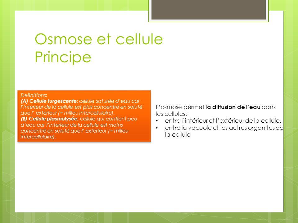 Osmose et cellule Principe Losmose permet la diffusion de leau dans les cellules: entre lintérieur et lextérieur de la cellule. entre la vacuole et le