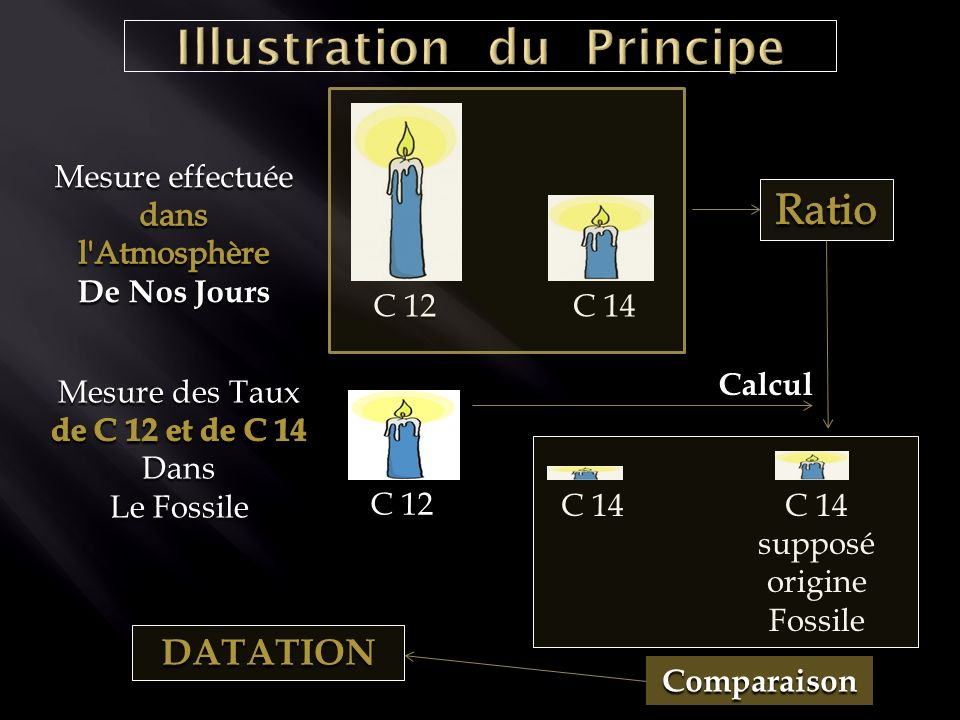 C 12 C 14 C 12 C 14 supposéorigineFossile Comparaison Calcul DATATION