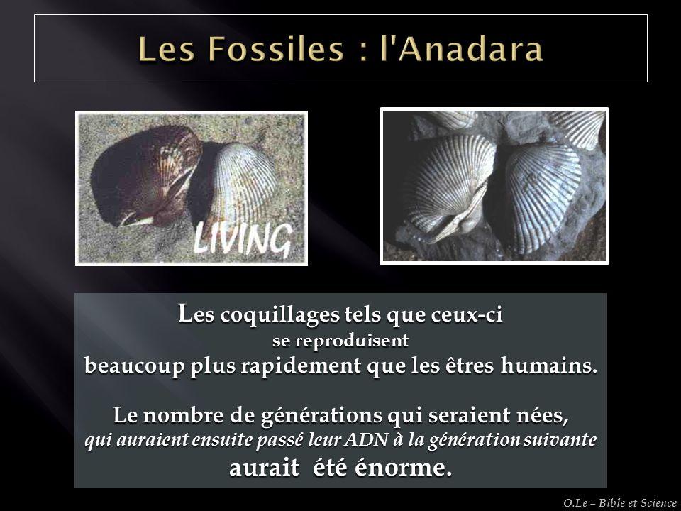 L es coquillages tels que ceux-ci se reproduisent beaucoup plus rapidement que les êtres humains. Le nombre de générations qui seraient nées, qui aura