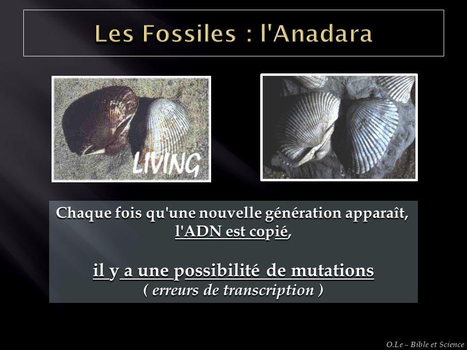 Chaque fois qu'une nouvelle génération apparaît, l'ADN est copié, il y a une possibilité de mutations ( erreurs de transcription ) O.Le – Bible et Sci