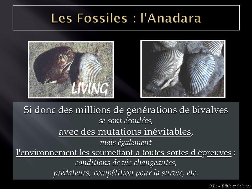 Si donc des millions de générations de bivalves se sont écoulées, avec des mutations inévitables, mais également l'environnement les soumettant à tout